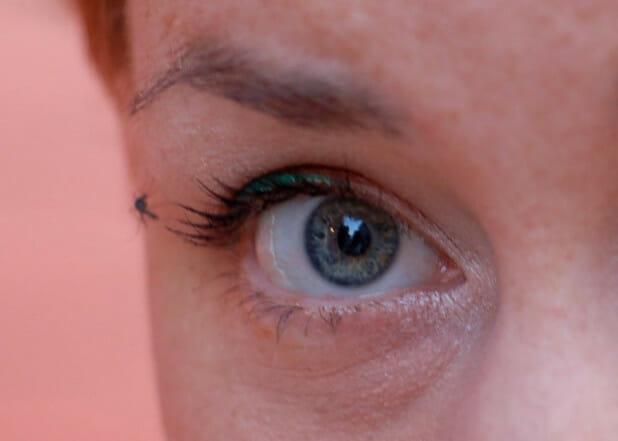 mosquitoe eyeliner
